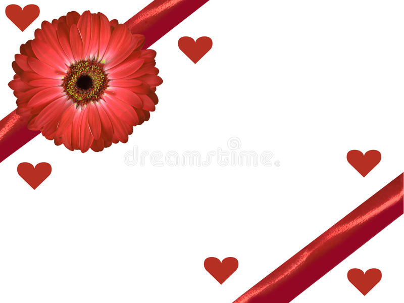 Isolated red gerbera daisy and ribbon with hearts valentines day card white background royalty free illustration