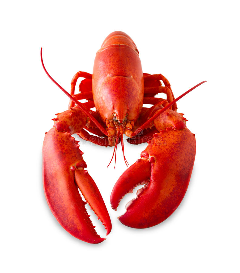 Free Isolated Red Lobster Stock Image - 24986051