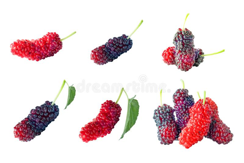Isolated mulberry fruit stock photo. Image of mulberry ...