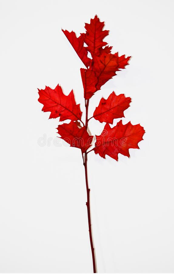 Branch of reddish autumnal leaves stock photo