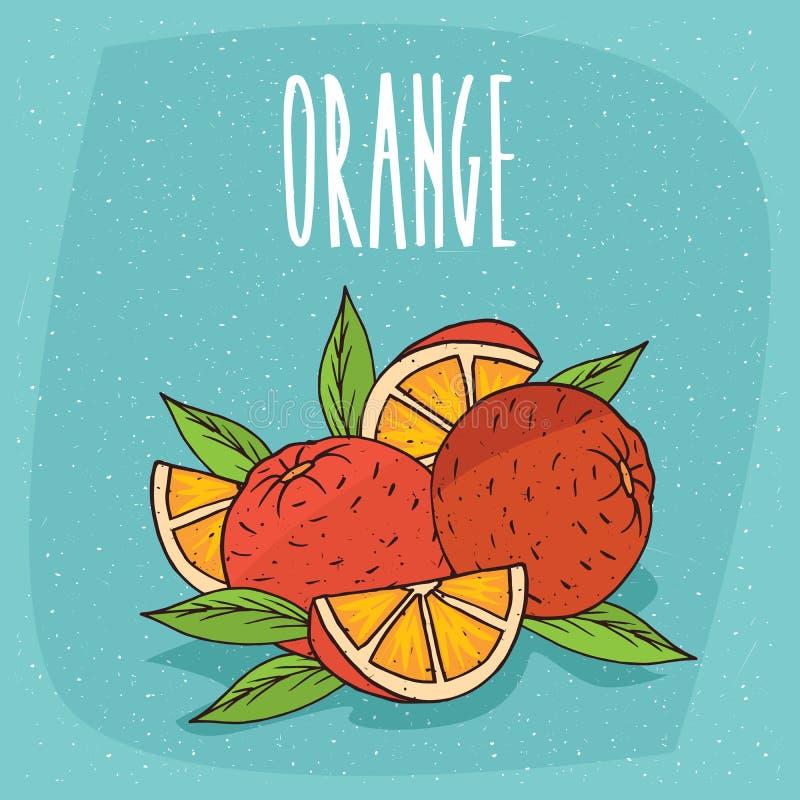 Isolated ripe oranges fruits whole and cut stock illustration