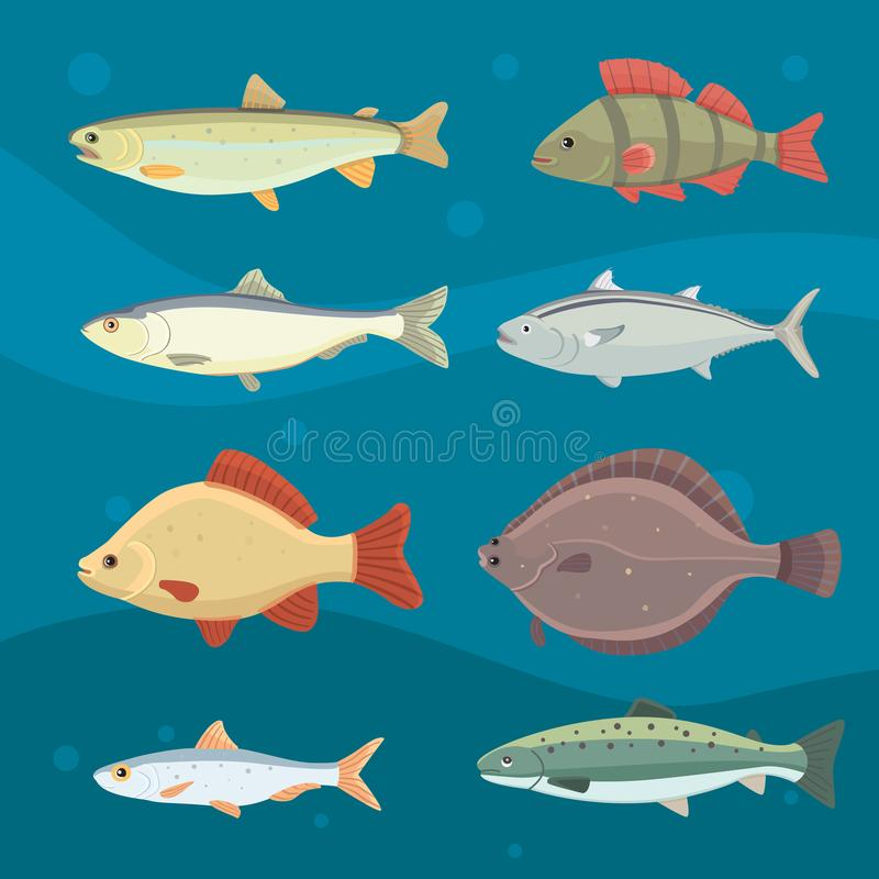 Isolated river fish. Set of freshwater sea cartoon fishes. Fauna ocean vector illustration.  stock illustration