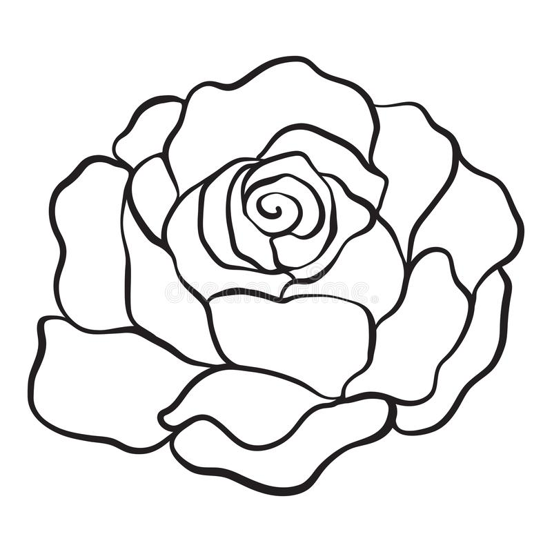 Isolated rose. Outline drawing. Stock vector illustration. Isolated rose. Outline drawing. Stock line vector illustration stock illustration