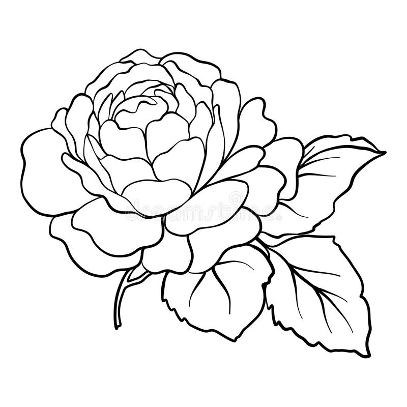 Isolated rose. Outline drawing. Stock vector illustration. Isolated rose. Outline drawing. Stock line vector illustration royalty free illustration