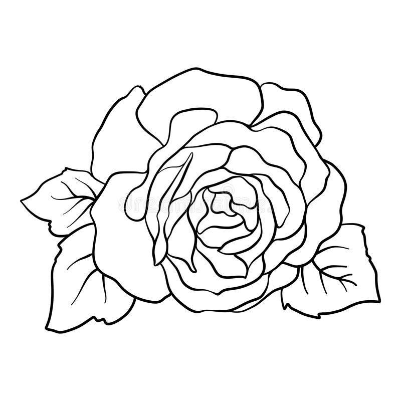Download isolated rose outline drawing stock vector illustration stock vector illustration of