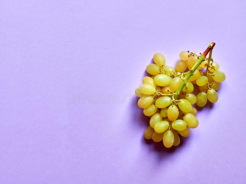 Isolated set of a bunch of sweet seedless grapes in studio with pastel violet background stock photography