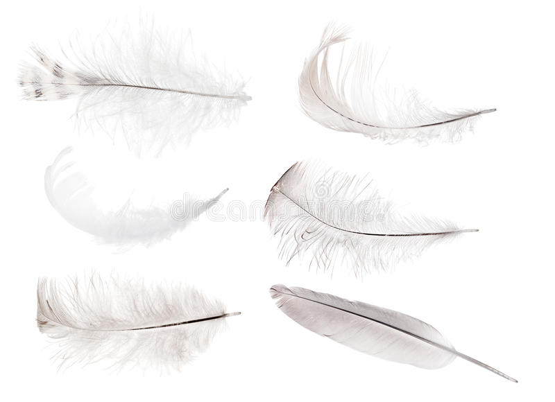 Isolated set of six gray feathers. Set of feathers isolated on white background stock image