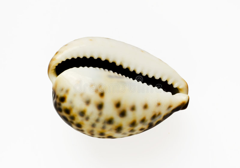 Isolated shell stock images