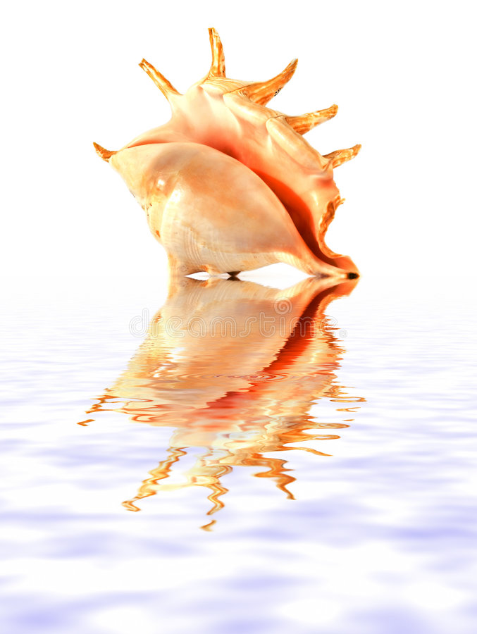 Free Isolated Shell Stock Images - 1503544