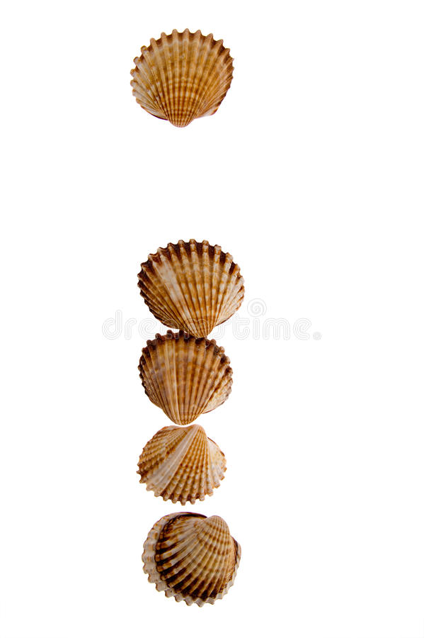 Free Isolated Shell Letter I Stock Photo - 16956610