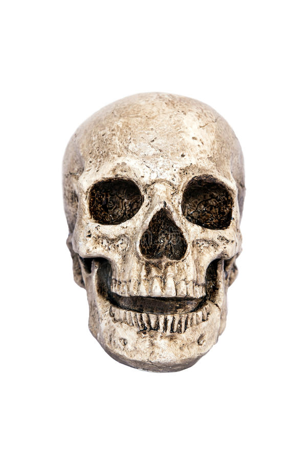 Isolated skull front view royalty free stock image