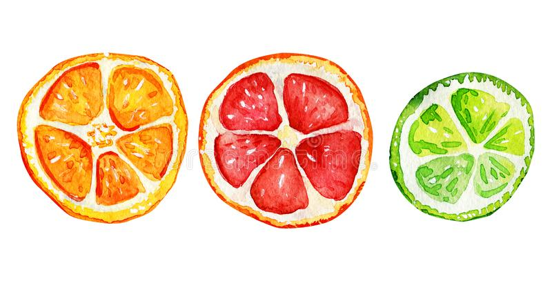 Isolated slices of orange, grapefruit and lime. Tropical refreshing exotic. Summer concept. Watercolor illustrations stock illustration