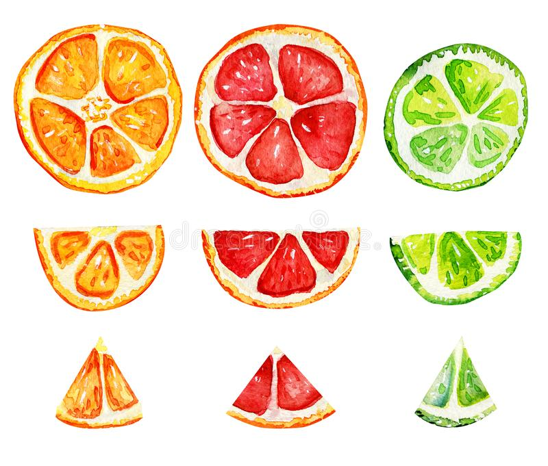 Isolated slices of orange, grapefruit and lime. Tropical refreshing exotic. Summer concept. Watercolor illustrations stock photos