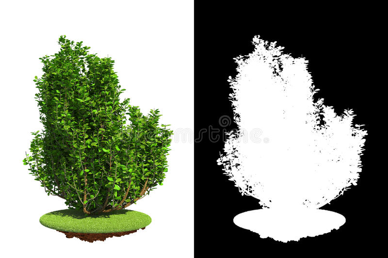 Download Isolated Spring Bush With Detail Raster Mask. Stock Image - Image of garden, easy: 38210123