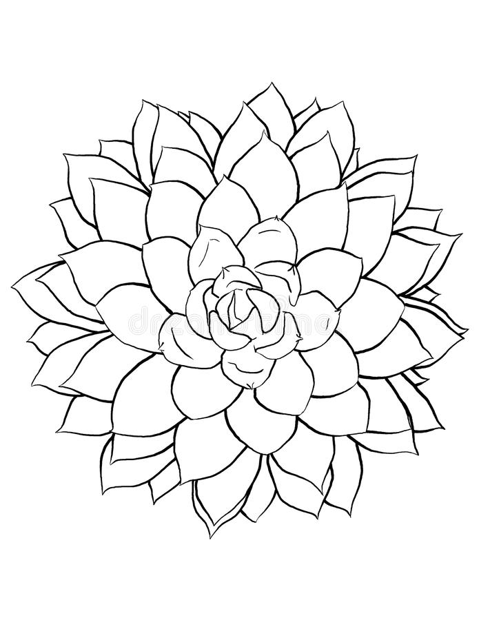 Succulent Line Art stock illustration. Illustration of ...