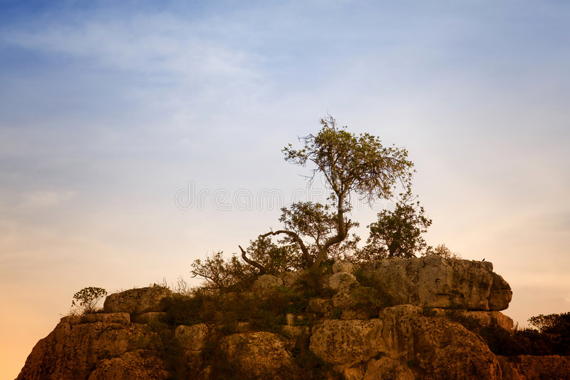 Download Isolated tree stock photo. Image of solitude, woody, wood - 2021210