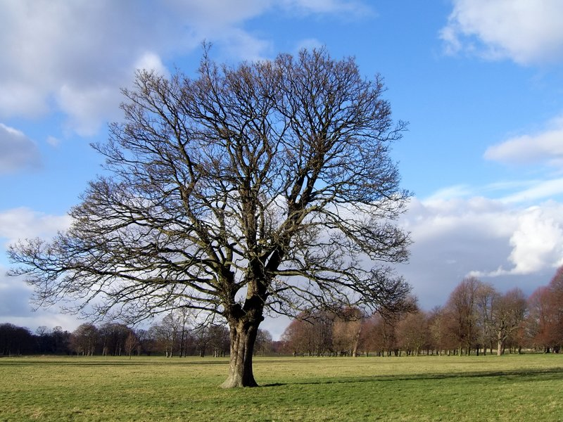 Isolated Tree 5 royalty free stock images