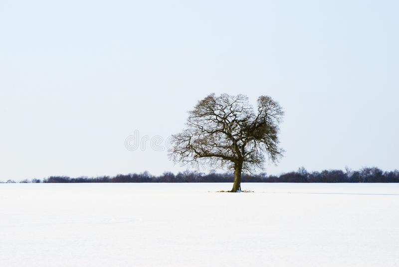 Download Isolated tree stock image. Image of bleak, frosty, landscape - 8264581