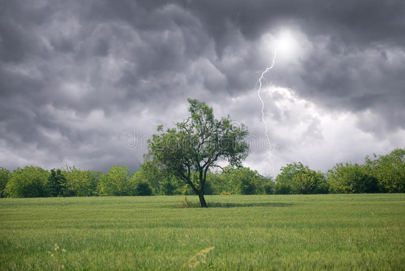 Download Isolated Tree In Countryside Stock Photo - Image of agriculture, season: 26193898
