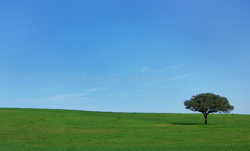 Isolated tree in field. stock photography