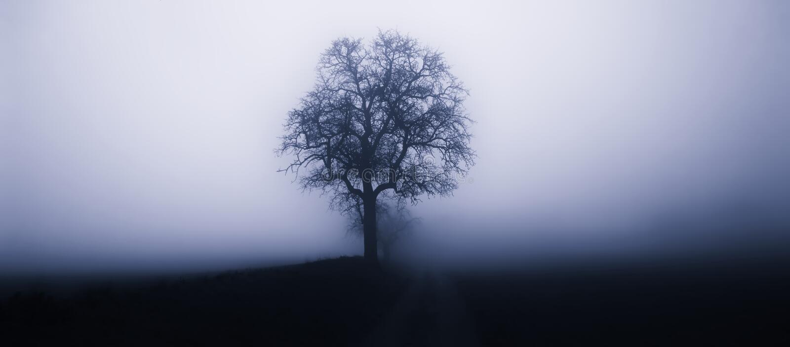 Isolated tree in fog surrounded by mysterious gloomy landscape. Rain,mist,road,negative space for text, minimalistic composition,late autumn,South Moravia stock image