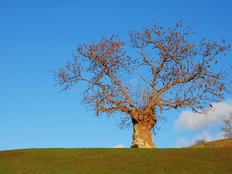 Download Isolated Tree Near Ambleside Royalty Free Stock Image - Image: 1700576