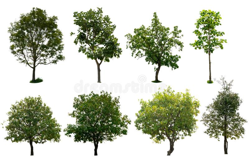 Isolated tree set a white background stock photography