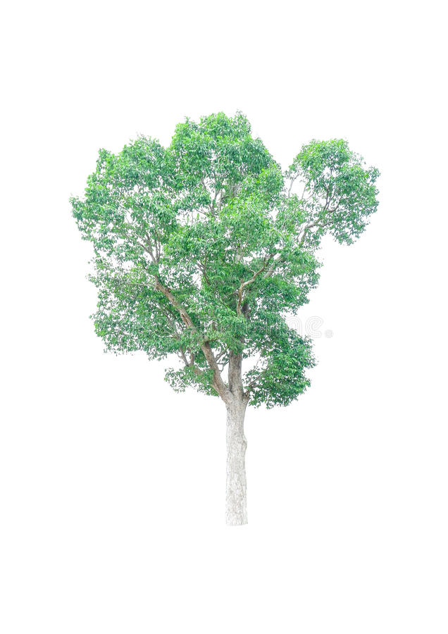 Isolated tree. stock photography