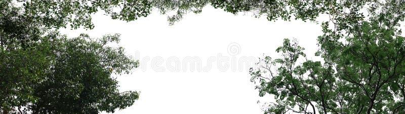Isolated tree on white background. Isolated tree on white background with empty space royalty free stock photography