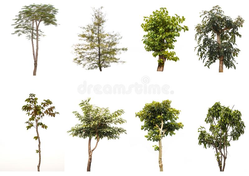Isolated trees on white background , The collection of trees. royalty free stock photos