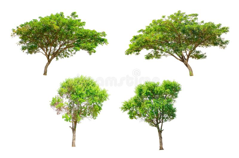Isolated Trees on white background royalty free stock image