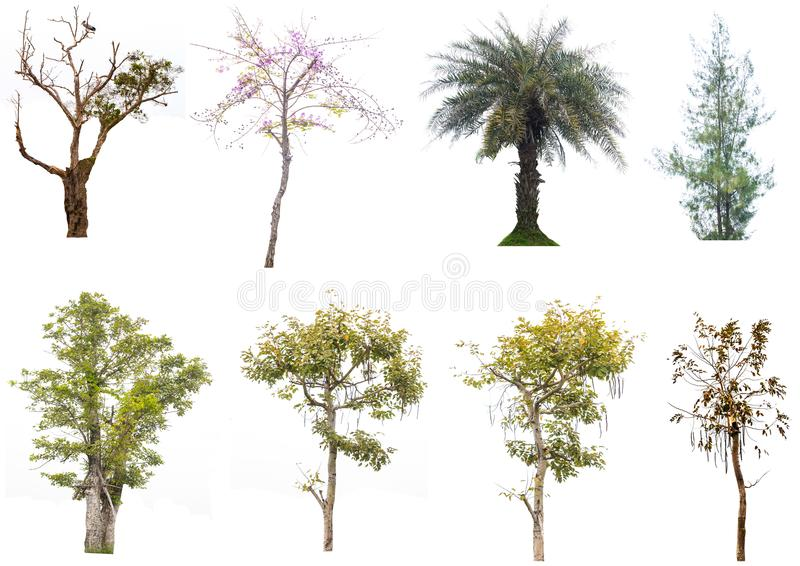 Isolated trees on white background stock images