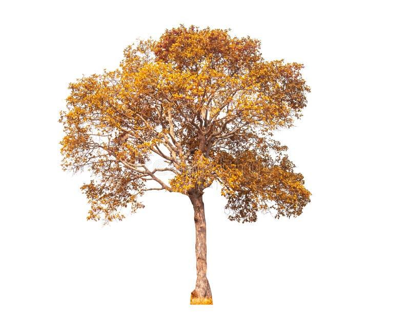 Isolated trees on white background stock photos