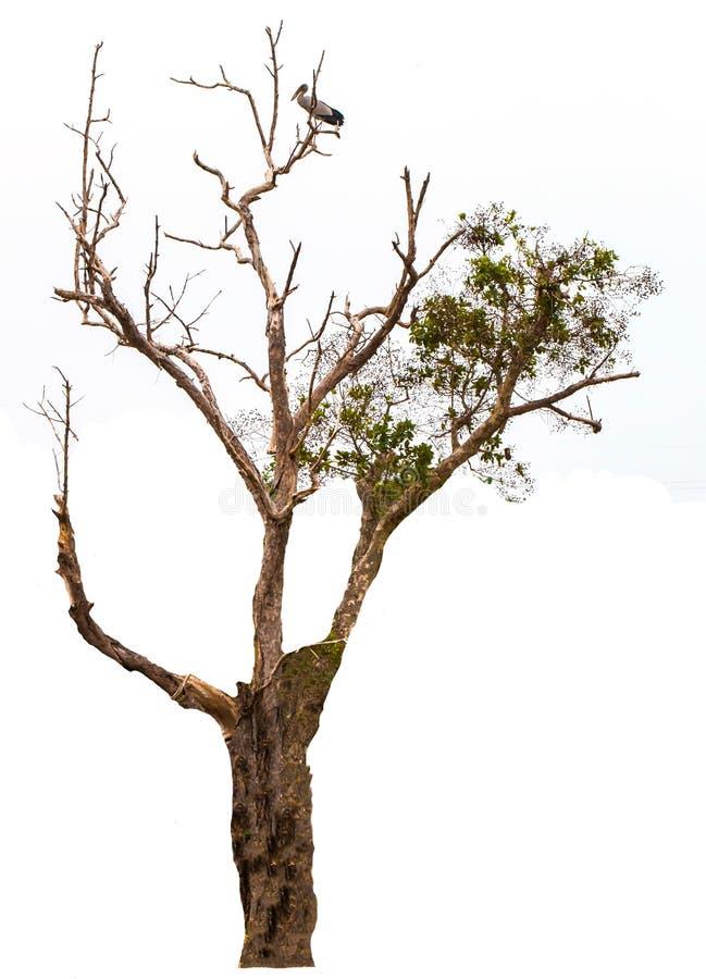 Isolated trees on white background royalty free stock photo