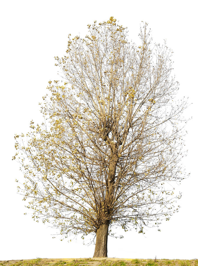 Free Isolated Ugly Curve Tree Without Leaves Stock Images - 16883004