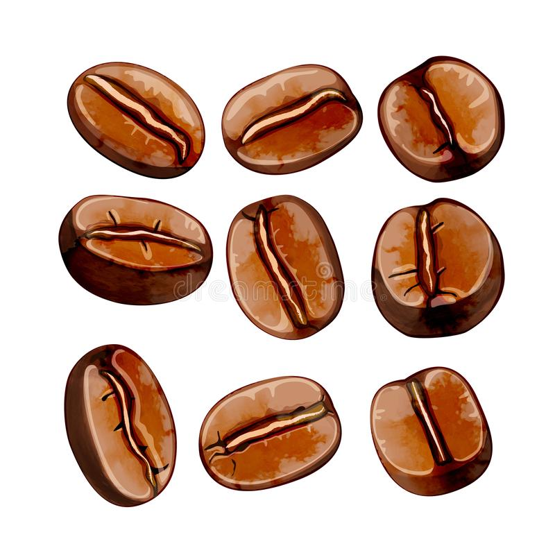 Isolated  watercolor coffee beans vector set.  royalty free illustration