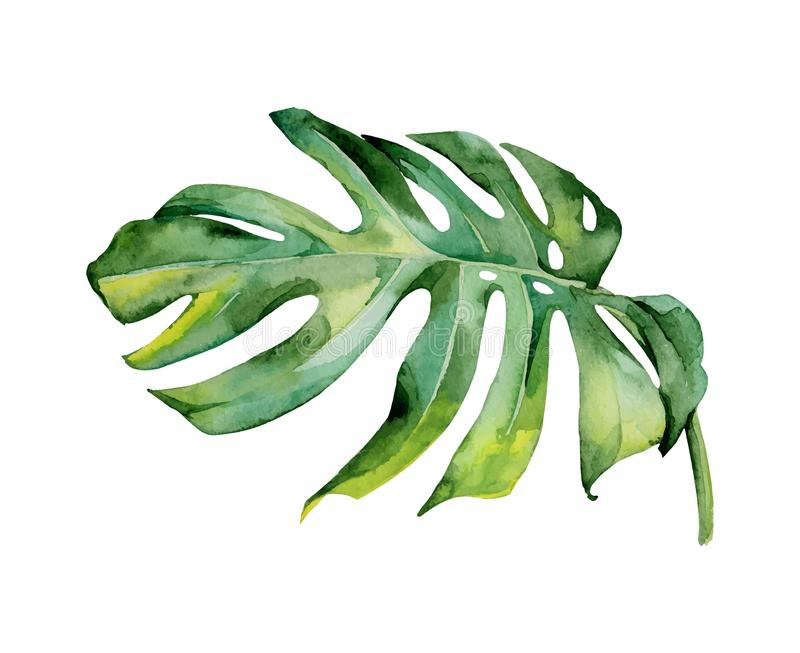 Isolated watercolor green plant leaf deocration royalty free illustration
