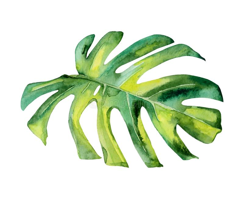 Isolated watercolor green plant leaf deocration vector illustration