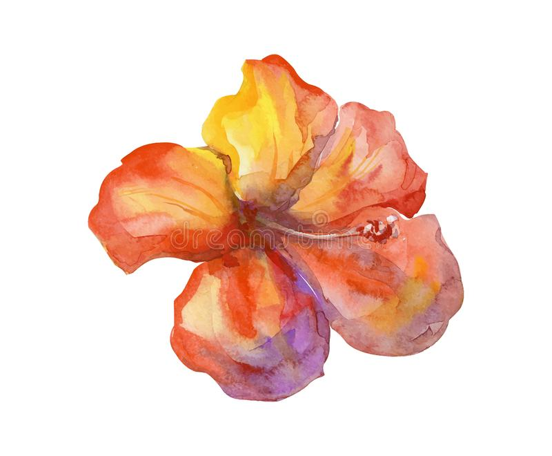 The isolated watercolor orange painting flower stock illustration