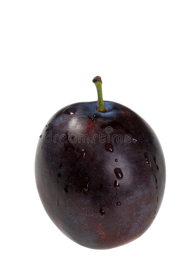 Isolated wet plum stock image