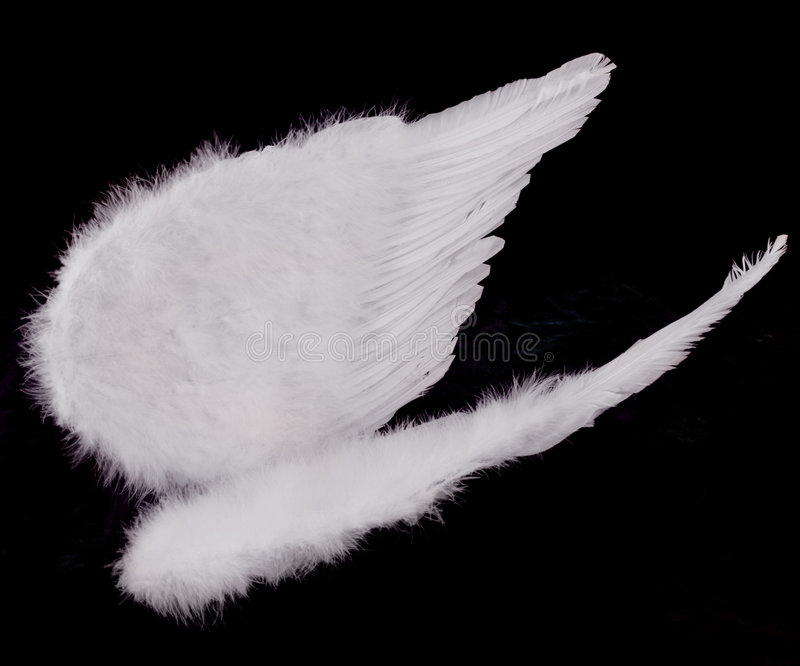 Isolated White Angel Wings on Black stock image