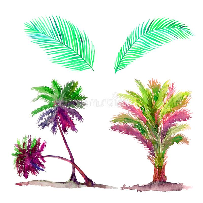 Isolated on white colorful palms set and leaves watercolor painting, illustration design element. For invitation, card, print, posters vector illustration
