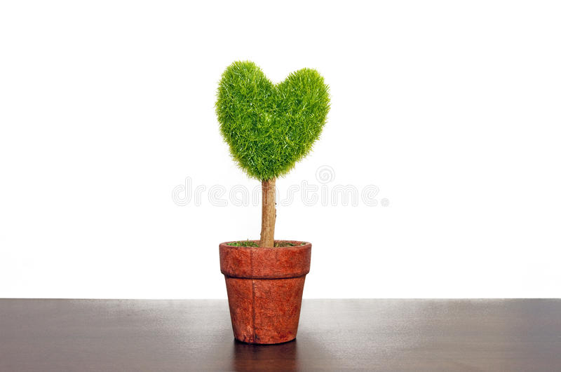 Isolated on white plant pot. A tree-shaped plants separated white pots stock photography