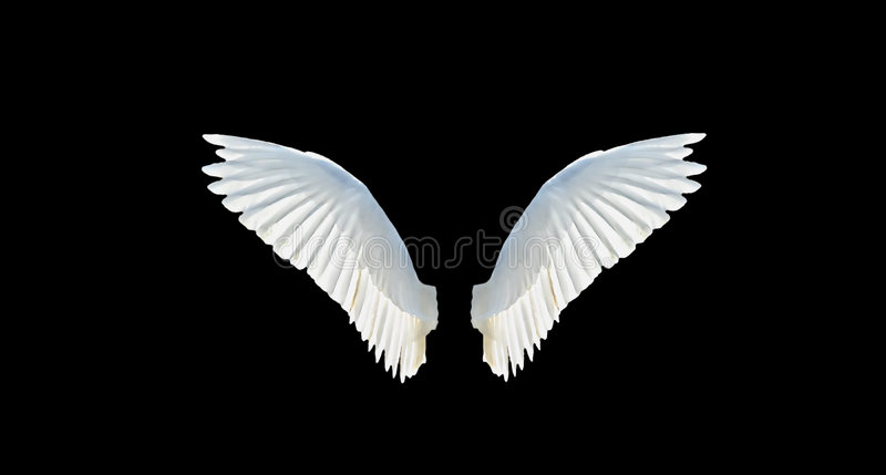 Isolated wings stock photos