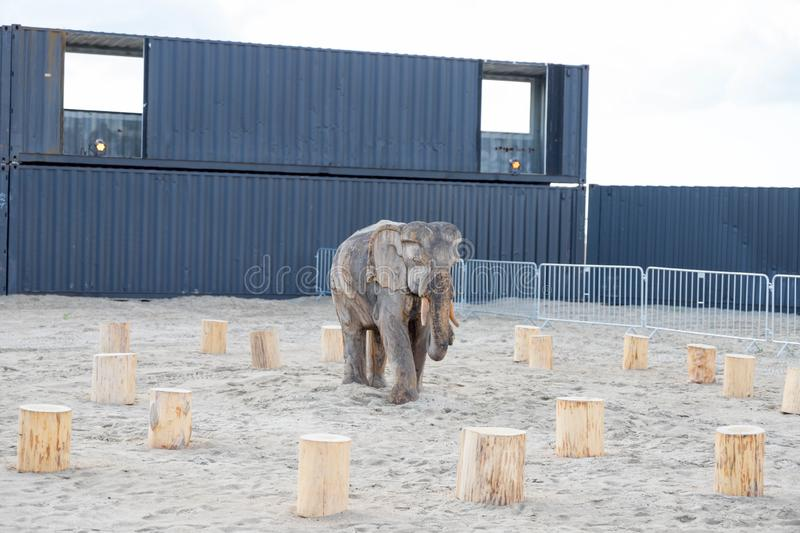 Elephant sculpture wood statue on the beach sand timber stock image