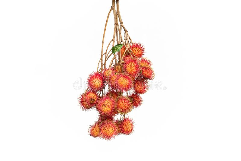 Isolated XXL size, Asian fruit : rambutan on white background. stock images