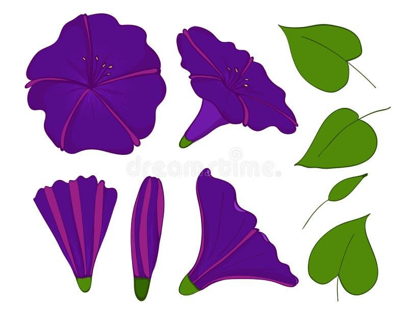 Isolatieelementen van violette of blauwe winde bloemen, knoppen en bladeren van ochtend-glorie Vastgestelde winde stock illustratie