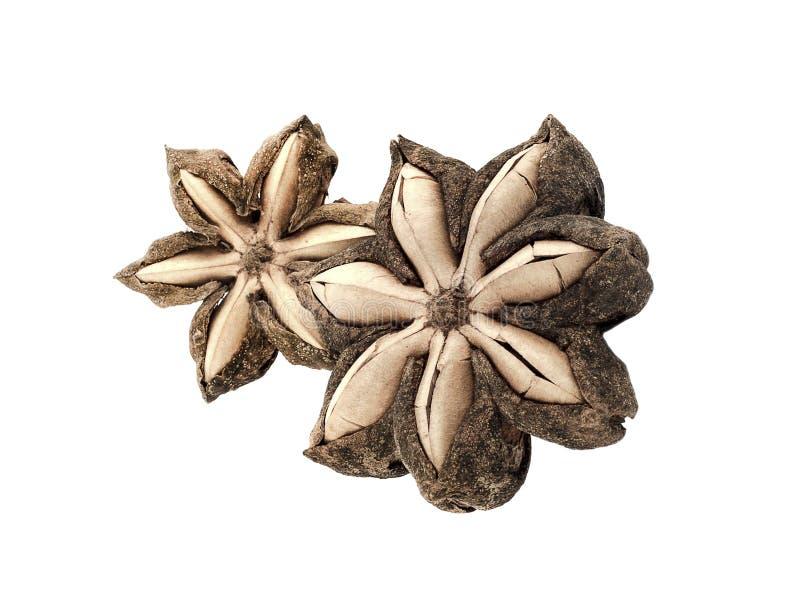 Isolato del seme dell'arachide di inchi di Sacha su fondo bianco fotografia stock libera da diritti