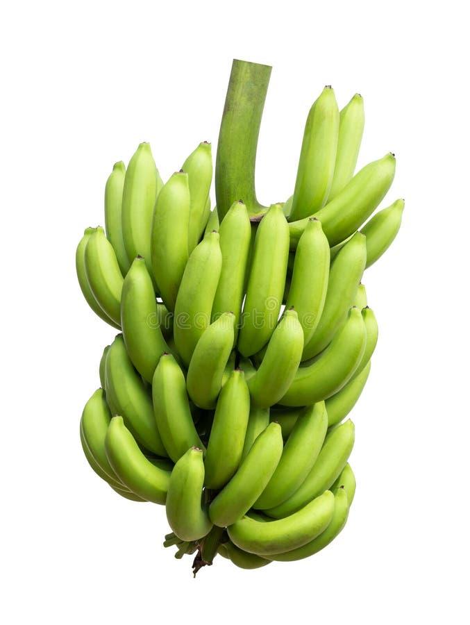 Isolato della banana di Cavendish fotografia stock libera da diritti