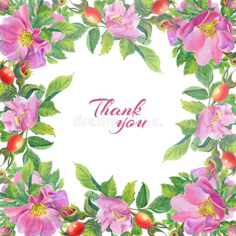 Isolato sul bianco Cartolina d'auguri con i fiori selvaggi dell'acquerello su un fondo bianco Rosa canina illustrazione del rovo royalty illustrazione gratis